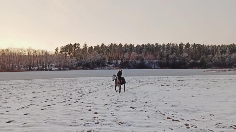 Силикатные озера лошади Липецк