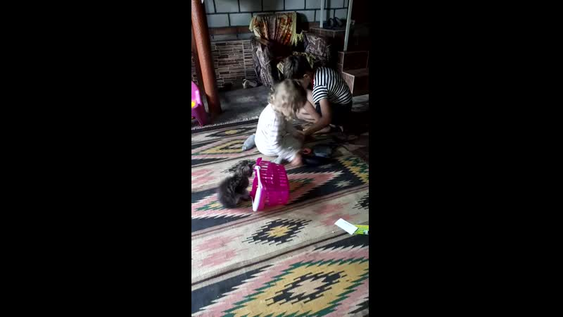 лиза влад и котенок
