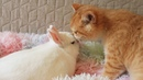 It's good when you have a friend | Cute kitten Kisses a Bunny