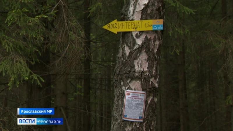 Волонтёры поисковики размещают в лесах стрелки ориентиры