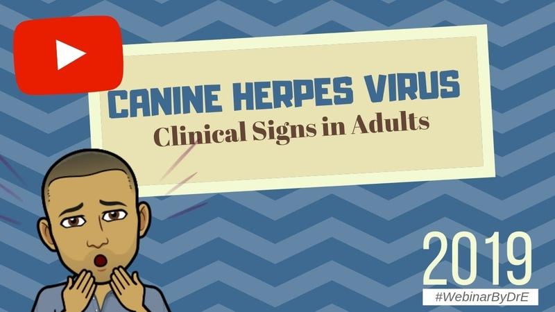 Герпесвирусная инфекция собак клинические признаки у взрослых Canine Herpes Virus Clinical Signs in the Adults