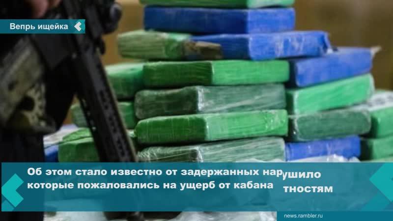 В Италии дикий кабан нашел запасы кокаина на 20 тыс евро и уничтожил их