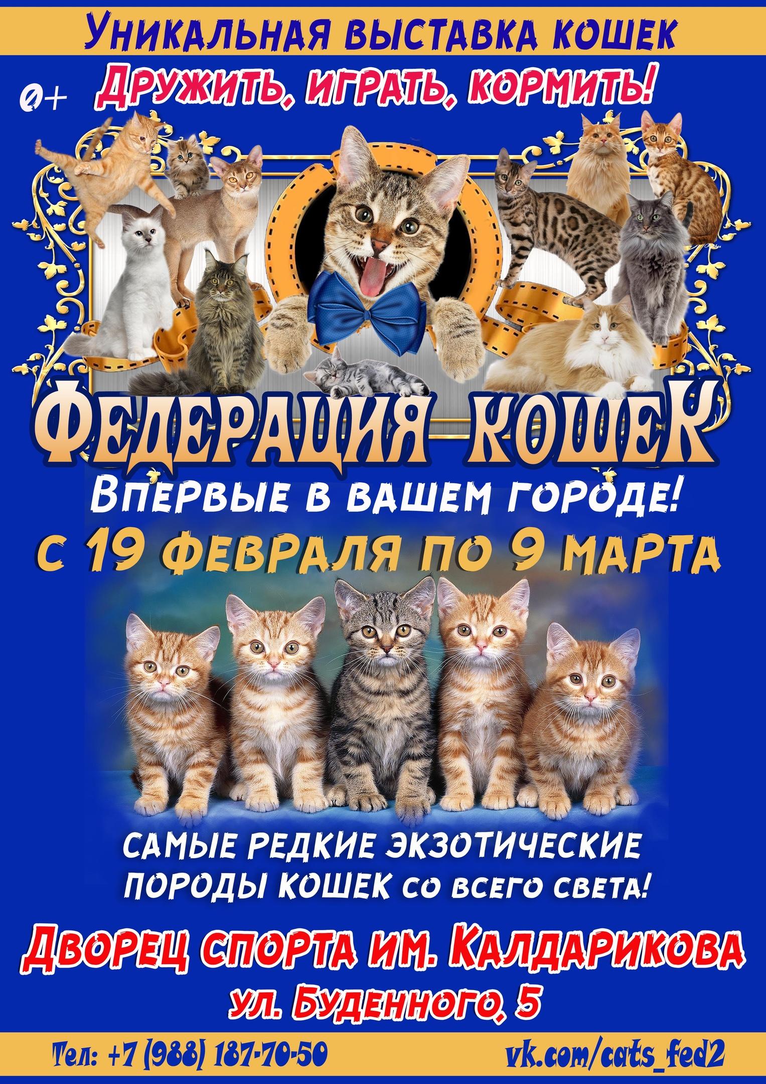Выставка «Федерация кошек» в Элисте