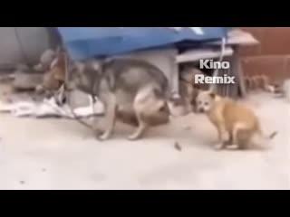 музыка Dj Spy - Egy kis kenyr egy kis bor ржач до слез танцующие еноты собаки смешные приколы 2019