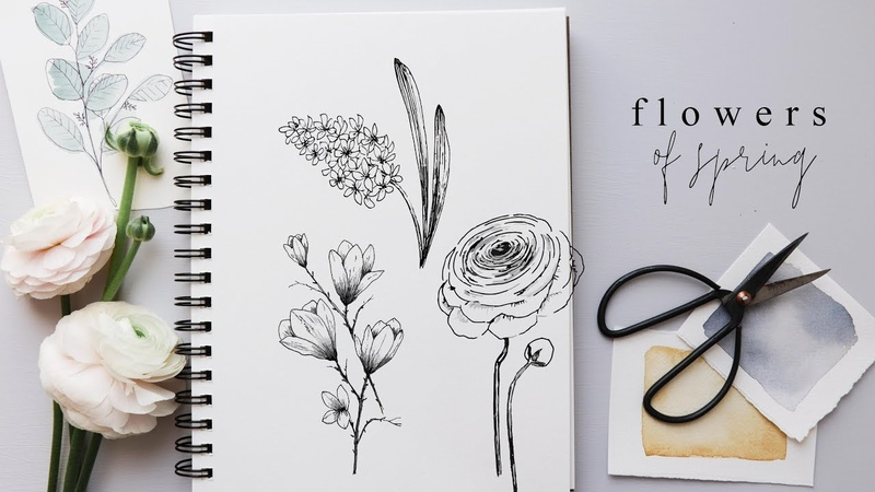 How to Draw Flowers Step By Step Hyacinth Magnolia and Ranunculus