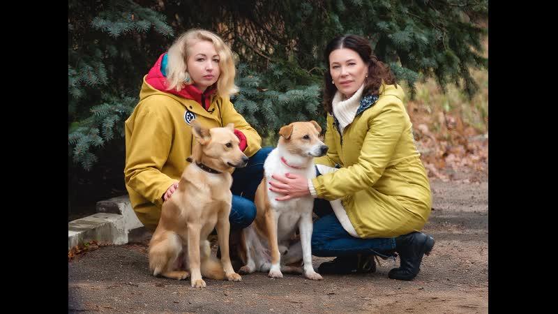 № 39 Художница Марта Шматова и её любимцы Трогательная история рыжих псов Путь домой