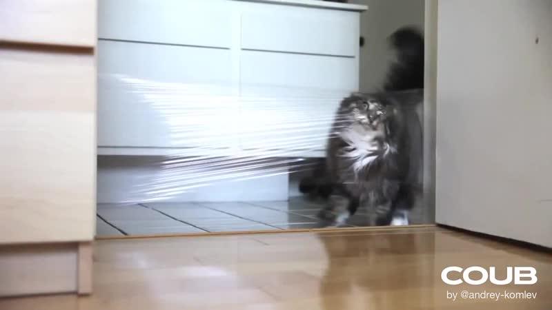 Snatch cat
