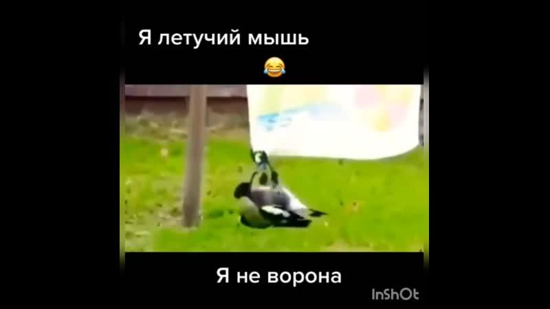 Я летучий мышь я не ворона😂