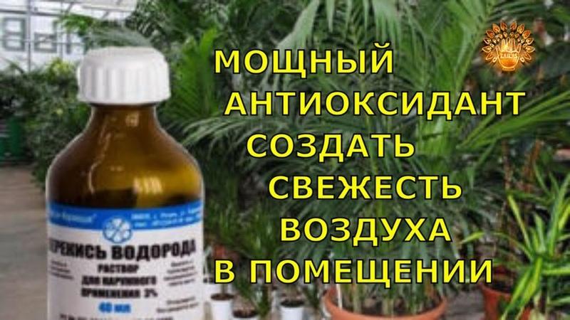 ✨Перекись водорода -Мощный Антиоксидант ✨Школа Кайлас Советы Дуйко АА Эзотерика тайные Знания
