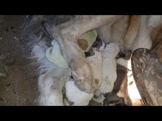 Зеленый щенок родился в городе Ахалцихе на юге Грузии. Хозяева назвали его Гринчем. У собаки такой..