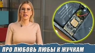 Как охотиться на Соболь с помощью жучка за 700 рублей