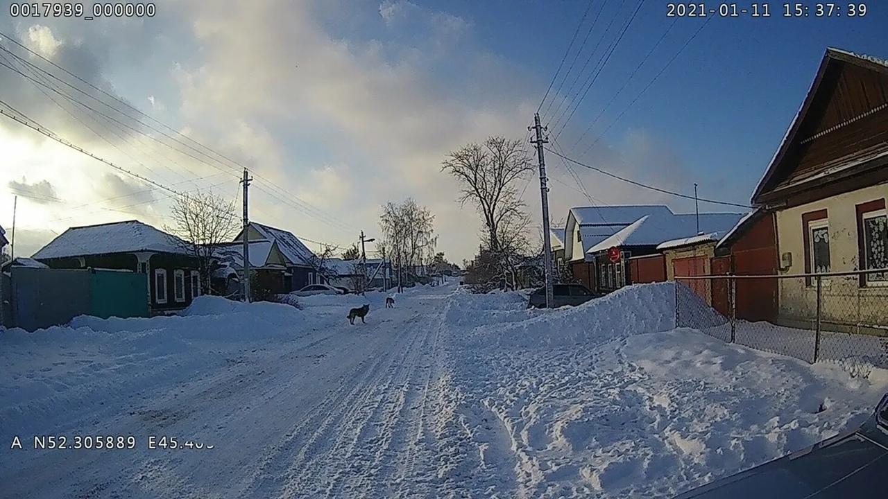 Администрация Петровского района напоминает о правилах выгула домашних животных