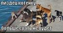 Личный фотоальбом Владимира Пискарева