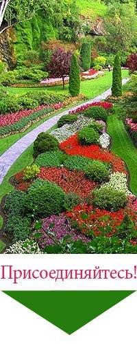 Ландшафт. Дизайн. Цветоводство. Садоводство. | группа