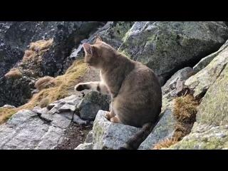 Польский турист на высоте 2,5 тыс. м над... моря нашел кота.mp4
