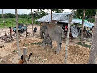 Видео от Экскурсии |Таиланд | Seven Countries | Паттайя