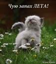Персональный фотоальбом Виктории Морозовой