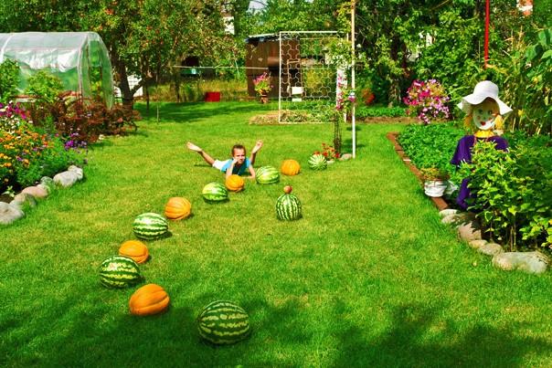7 веских причин посеять газон на Вашем участке, изображение №5
