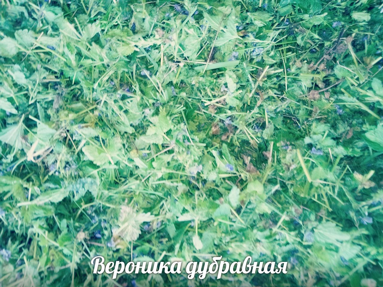 фото из альбома Ангелины Поповой №12