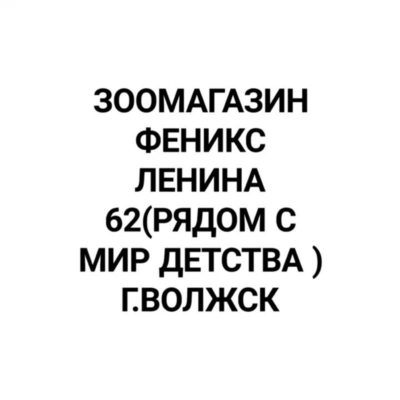 VID_44450326_081958_515.mp4