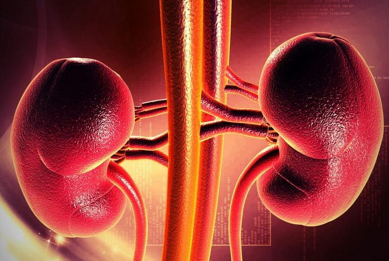 Заболевания мочевыводящей системы (часть 2)