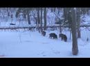 Видео от Максима Пелевинова