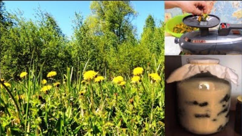 Одуванчик Желтая 🌻 Таблетка Для Зрения А Его Мукополисахарид Для Здоровья Печени