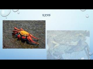 Экология. Жители подводного мира.