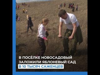 В посёлке Новосадовый заложили яблоневый сад в 10 тысяч саженцев