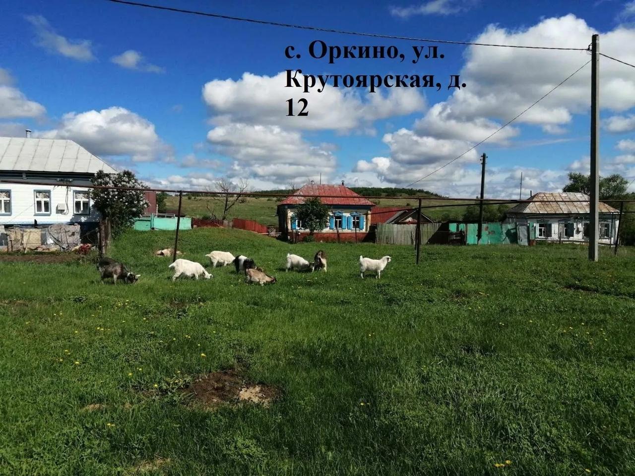 Административная комиссия выявила факты бесконтрольного выпаса сельскохозяйственных животных на территории Новозахаркинского муниципального образования