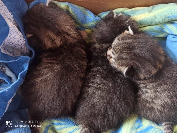 Дочка на улице нашла котят ,они совсем крохи 😱. Се...