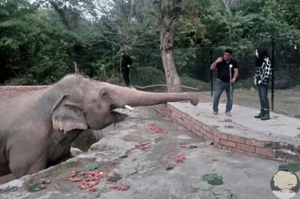 Шер спасла самого одинокого в мире слона