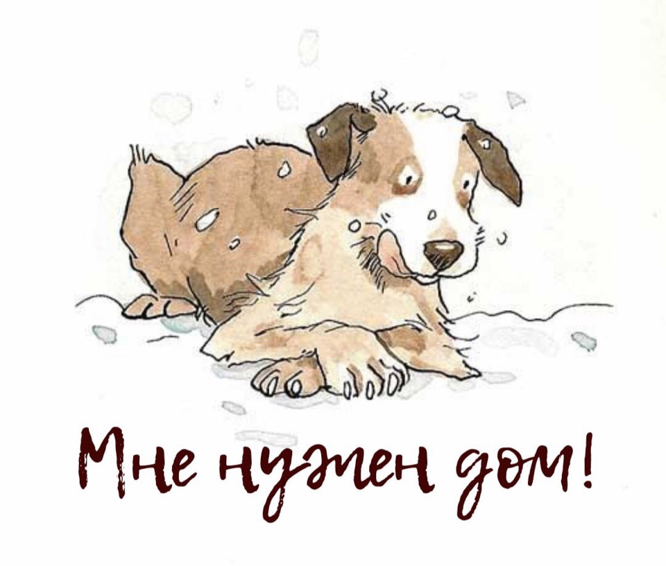 Каждая собака мечтает о чуде. Чудо это