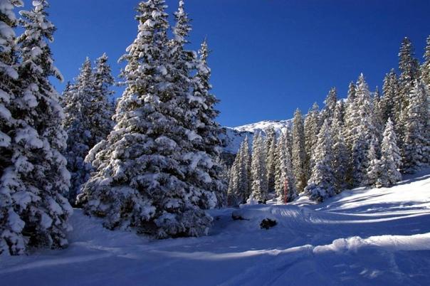 Путешествие в зиму