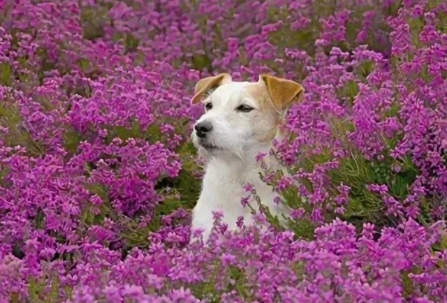 Цветочный гороскоп для вашей собаки