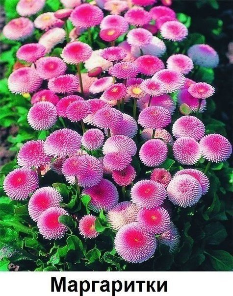 Цветы вдоль дома! (источник: gofazenda)