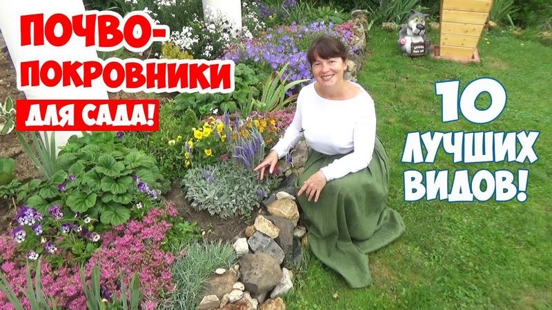 Какие почвопокровные цветы посадить в саду 10 лучших ПОЧВОПОКРОВНИКОВ цветущих все лето