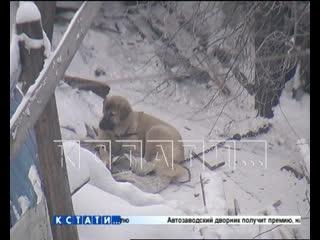 Друг на обед - попавшие в концлагерь для животных собаки, бесследно исчезают