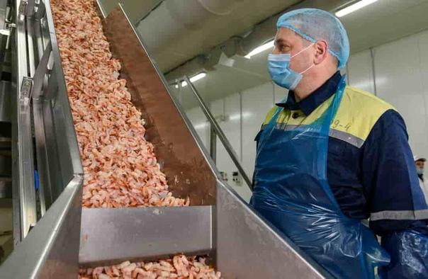 Фасовщик-упаковщик морепродуктов  от 42 000 руб. на руки    ООО CitySt