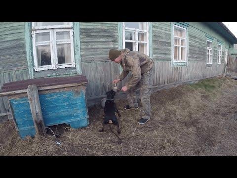 КУПИЛ ХУТОР в ЛЕСУ на краю БОЛОТА Часть 8 Жизнь на хуторе Белорусская кухня
