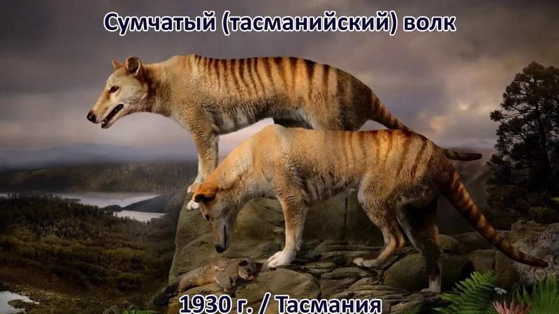 ВЫМЕРШИЕ ЖИВОТНЫЕ за последние 500 лет. Их уже не вернуть