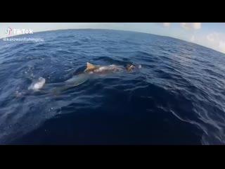 Двое рыбаков на Багамах спасли морскую черепаху от голодной акулы и выпустили в нескольких километрах от опасности.