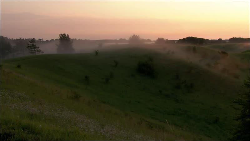 Дикая природа Германии / Дикая местность