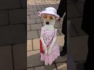 Собаки тоже может ходит как человек