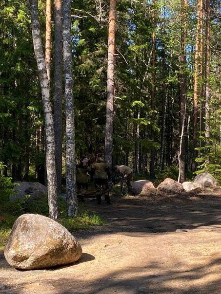«Эко-туристы» спиливают сосну, чтобы проехать за ограждение из валунов. Фото автора.