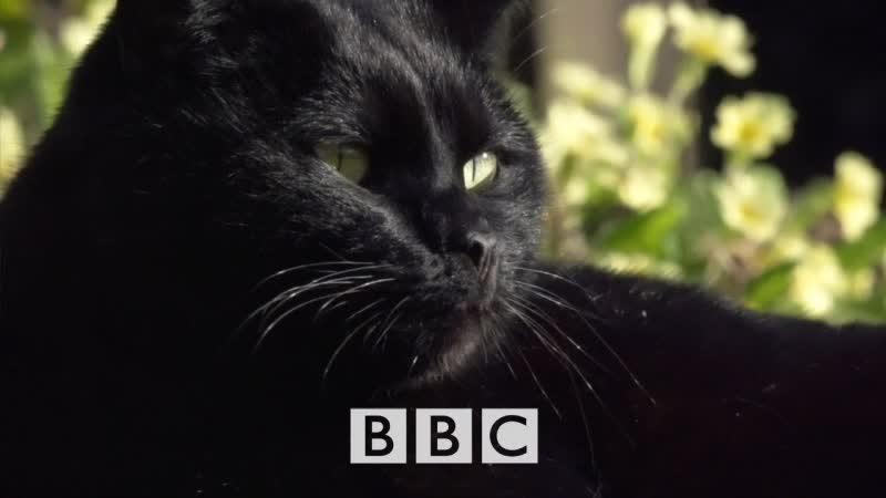 BBC Horizon Тайная жизнь кошек 2013