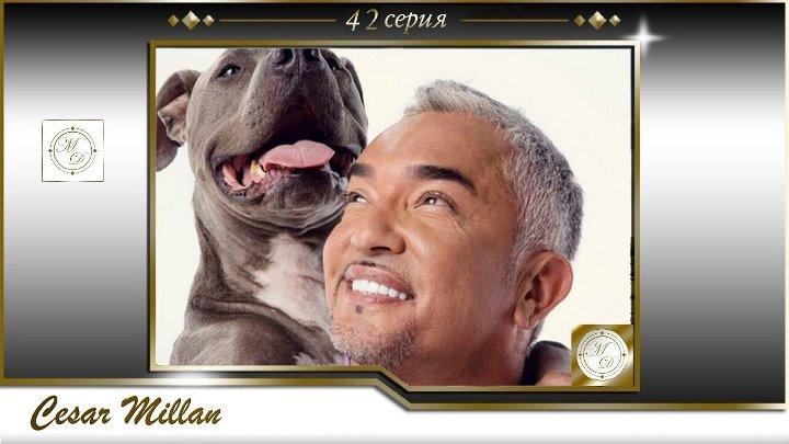 42 серия Сезар Миллан Переводчик с собачьего ночь трех собак йорки